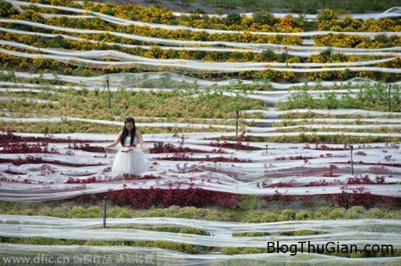 chiec vay cuoi dai ky luc 4100m 20140925160439124 Váy cưới độc nhất vô nhị dài kỷ lục tới 4.100