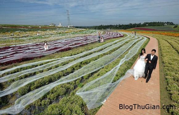 chiec vay cuoi dai ky luc 4100m 20140925160441124 Váy cưới độc nhất vô nhị dài kỷ lục tới 4.100