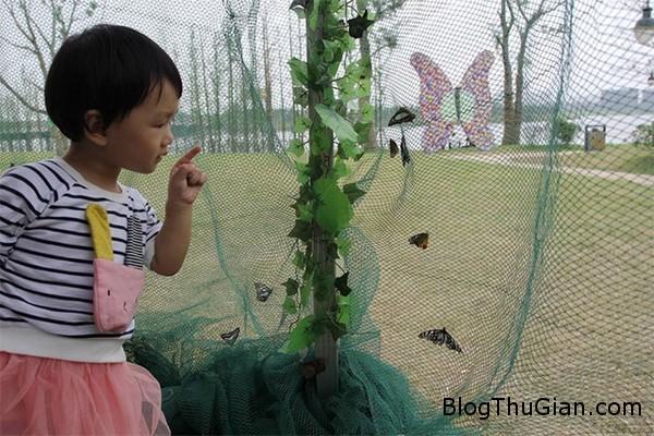 mua 100000 con buom de quang cao bat dong san Mua hơn 100.000  con bướm thả ở khu bất động sản để thu hút khách tham gia