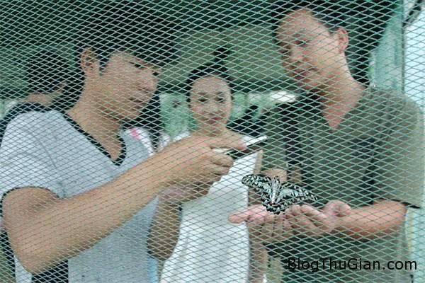 mua 100000 con buom de quang cao bat dong san1 Mua hơn 100.000  con bướm thả ở khu bất động sản để thu hút khách tham gia