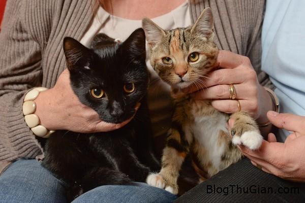 cap doi meo leo treo gioi hon nho di tat thua ngon chan Bị dị tật nhiều ngón giúp mèo leo trèo tốt hơn