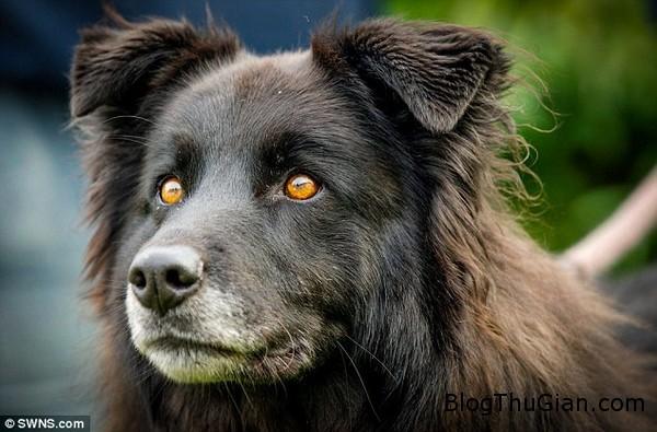co cho bi xa lanh vi mang doi mat quy du Cô chó không được ai nhận nuôi suốt 8 năm vì mang cặp mắt ma quái