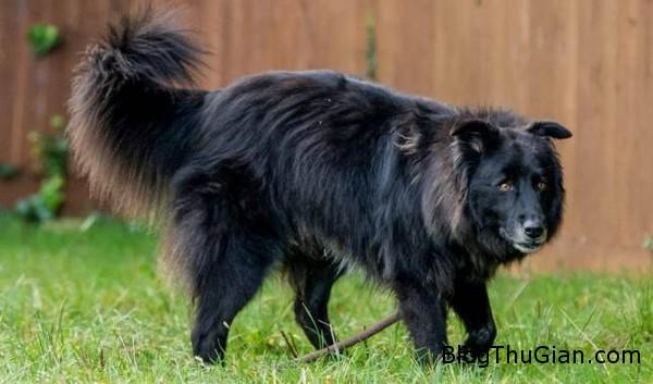 co cho bi xa lanh vi mang doi mat quy du1 Cô chó không được ai nhận nuôi suốt 8 năm vì mang cặp mắt ma quái