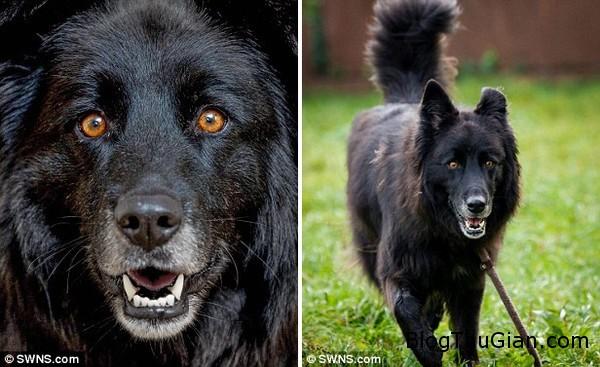 co cho bi xa lanh vi mang doi mat quy du2 Cô chó không được ai nhận nuôi suốt 8 năm vì mang cặp mắt ma quái