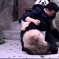 Hai con gấu trúc làm trò để không bị uống thuốc cực cu te