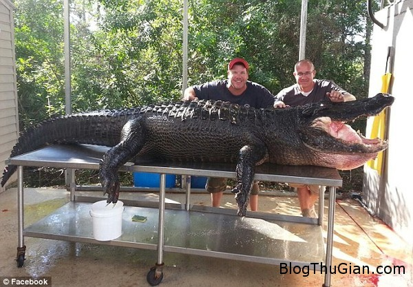 hai tho san tay khong bat ca sau khong lo dai 4m nang 347kg Tay không bắt quái vật 347kg