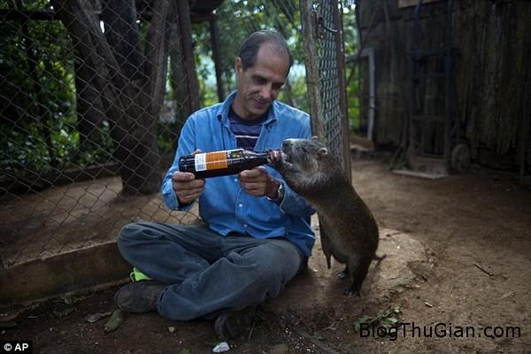 cap vo chong co thu cung la dan chuot hoang khong lo Bắt chuột khổng lồ làm thú cưng