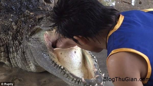 cong viec nguy hiem chui dau vao mieng ca sau Chui đầu vào cá sấu...công việc nguy hiểm mà không phải ai cũng dám làm