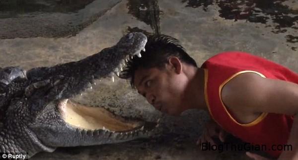 cong viec nguy hiem chui dau vao mieng ca sau1 Chui đầu vào cá sấu...công việc nguy hiểm mà không phải ai cũng dám làm