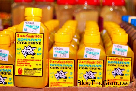 cowurine 171214 91d59 Điều chế phân bò làm sản phẩm trị mụn