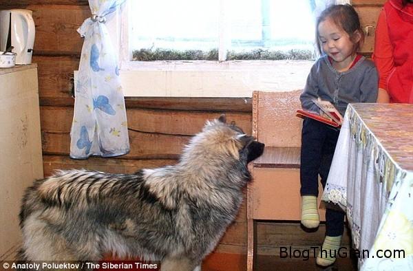 lac giua rung 12 ngay be gai 4 tuoi song sot nho chu cho bao ve2 Bé gái 4 tuổi lạc trong rừng suốt 12 ngày , sống sót nhờ sự bảo về của chú chó