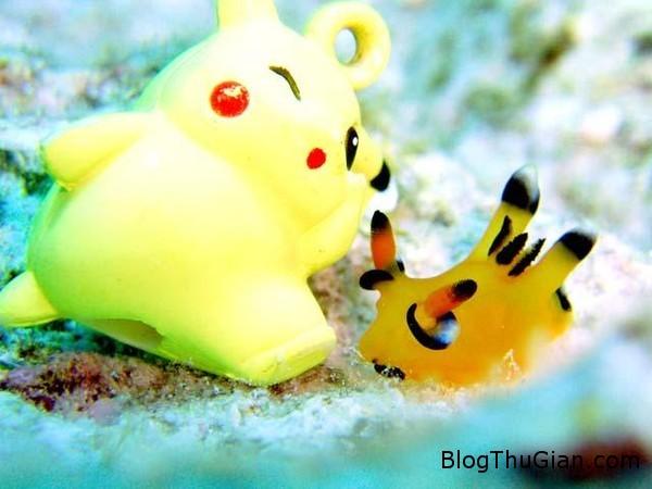 oc sen bien ngo nghinh co ngoai hinh giong pikachu Ốc biển có ngoại hình giống Pikachu