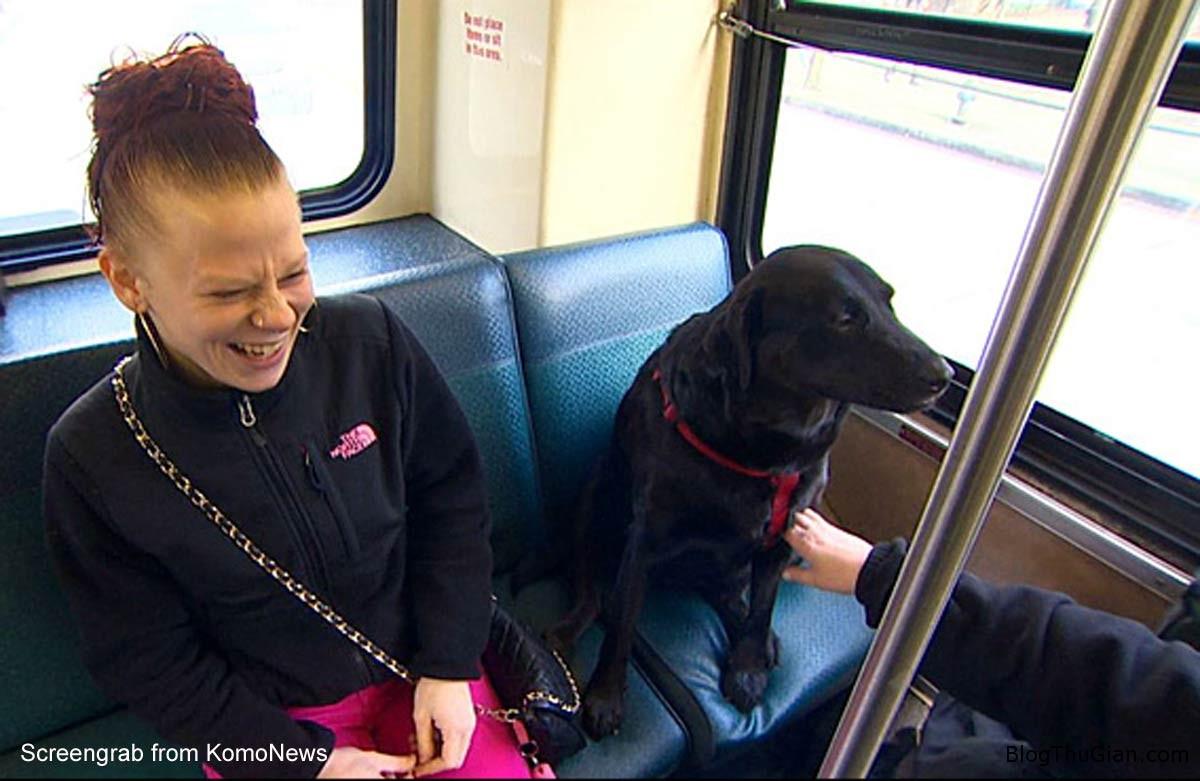 DogCover2 1ebd8 Chú chó tự bắt xe bus đi chơi công viên mỗi ngày