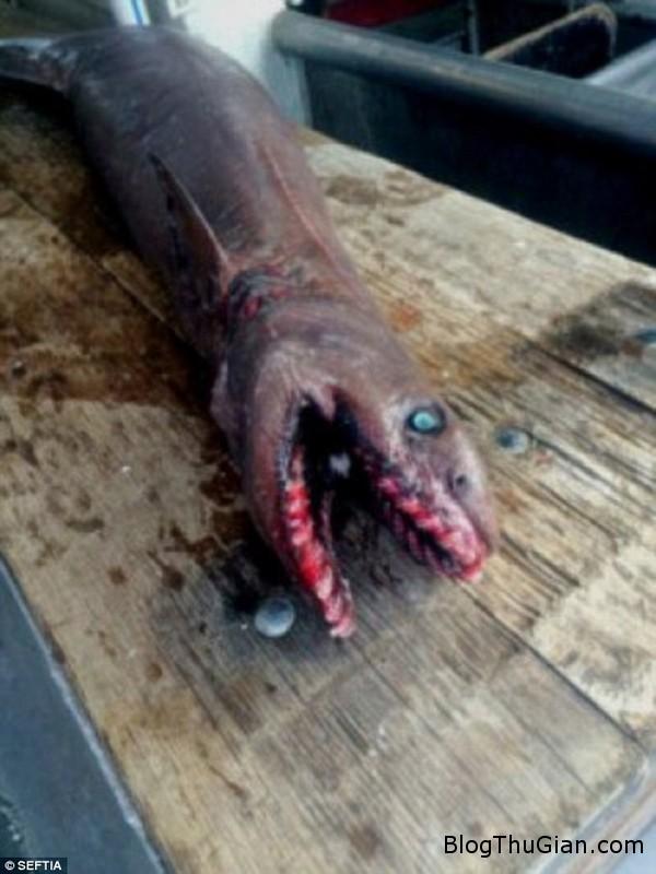 bang hoang bat duoc ca map thoi tien su co 300 chiec rang2 Bắt được loài cá mập thời tiền sử cách đây 80 triệu năm dưới độ sâu 700m