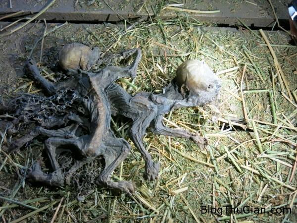 chile phat hien hai xac kho bi nghi la quai vat hut mau trong truyen thuyet Chi lê phát hiện xác khô của loài sinh vật nghi ngờ là quái vật hút máu trong truyền thuyết
