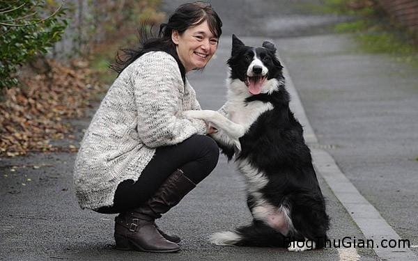 dog 5276 1420431003 Chú chó thông minh cứu chủ thoát khỏi bệnh ung thư