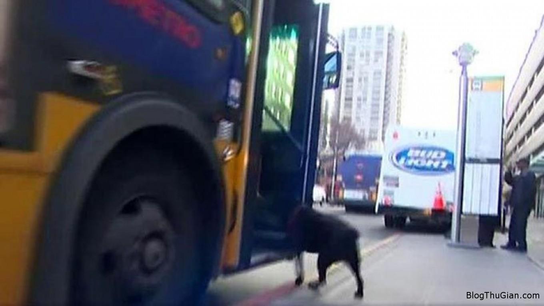 dog1 1ebd8 Chú chó tự bắt xe bus đi chơi công viên mỗi ngày