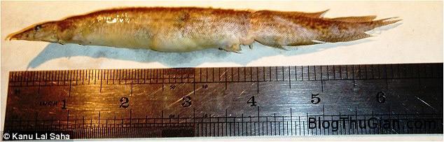luon chuihong 1ae92 Cậu bé 16 tuổi thoát chết khi bị Lươn mắc vào cổ họng suốt 5 tiếng