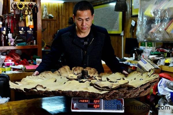 nam khong lo nang 74kg co duong kinh hon 1m2 Nấm khổng lồ có đường kính hơn 1m và nặng 7,4kg ở Trung Quốc