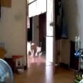 Gọi đồng đội nữa mới bựa chứ =)))) chú chó của năm