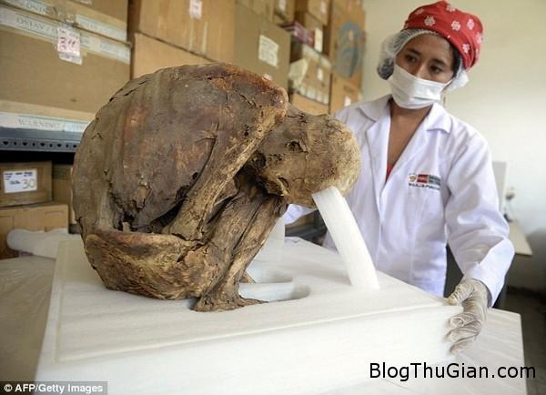 phat hien xac uop em be thoi tien inca tai peru 20150321151917994 Xác ướp em bé có niên đại 1000 năm được tìm thấy ở Peru