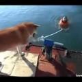 Con chó khốn nạn nhất quả đất =)))