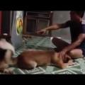 Cười muốn sặc cơm với thánh dậy chó a e phải biết yêu thương lẫn nhau