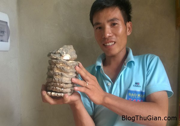 WP 20150710 009 6036 1436778743 Thanh Hóa : Vớt được một hàm răng lớn đã hóa thạch nghi của loài voi ma mút