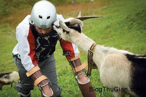 1439602110 1439570146 goat2 Người đàn ông thích sống như một con dê
