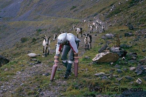 1439602110 1439570146 goat3 Người đàn ông thích sống như một con dê