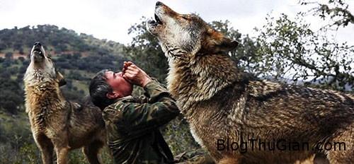 1439859303 1439806404 soi1 Người đàn ông sống chung với bầy sói suốt 12 năm