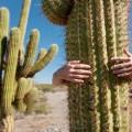 man hugging cactus