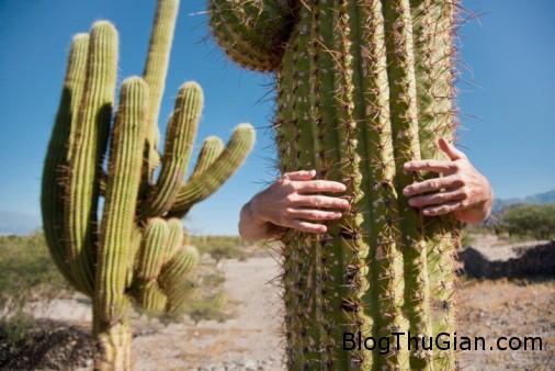 cactus Giải mã ý nghĩa giấc mơ thấy cây xương rồng & ngủ nằm mơ bị gai xương rồng đâm