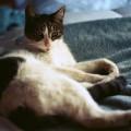 cat1-8729-1419502378