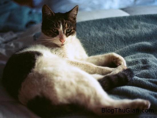 cat1 8729 1419502378 Một phụ nữ làm đám cưới với hai con mèo đực