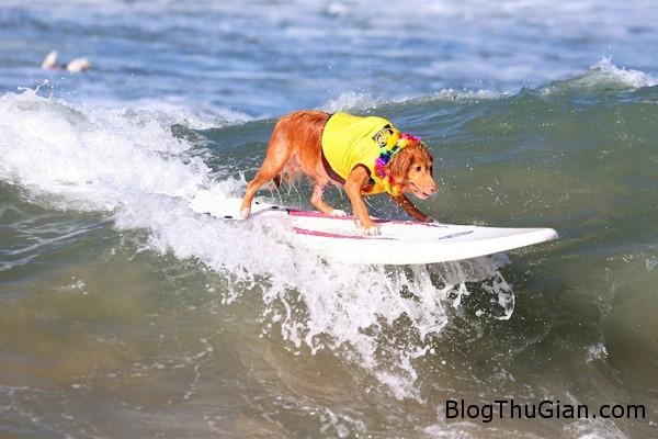 dog1 9690 1412221573 Chó trổ tài lướt sóng điệu nghệ như người