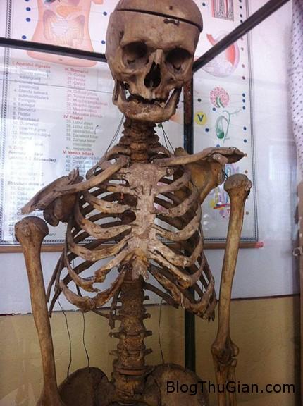 skeleton 2409 1414213576 Thầy hiệu trưởng quyên góp chính bộ xương của mình cho nhà trường sau khi qua đời