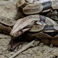 snake-2193-1422846914