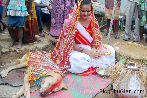 wedding 6629 1409797368 Thiếu nữ kết hôn với chó để xả xui