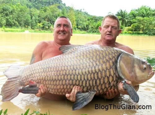 ca 5372 1382157447 Kỷ lục câu được con cá chép nặng 60 kg