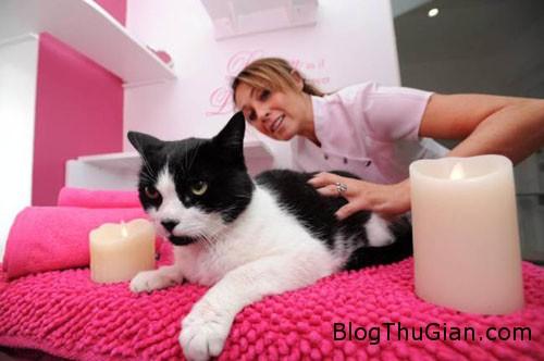 cat1 4450 1385440438 Khách sạn sang trọng dành riêng cho mèo