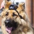 dog-2491-1383807527