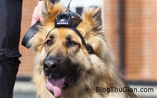 dog 2491 1383807527 Cấp lương hưu cho chó nghiệp vụ