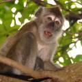 monkey-6307-1384140110