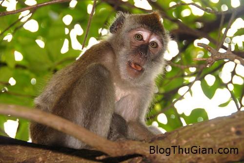 monkey 6307 1384140110 Thợ săn bắn chết người vì nhầm là khỉ