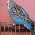 parrot24n-3-web-500-6088-1390535600