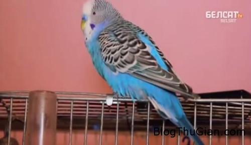 parrot24n 3 web 500 6088 1390535600 Con vẹt tranh cử hội đồng