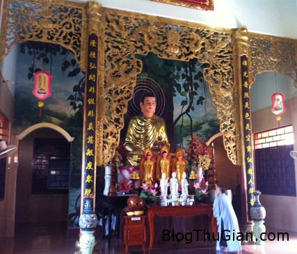 ran1 8051 1389583840 Đàn rắn ở chùa quăng mình xuống chánh điện nghe kinh