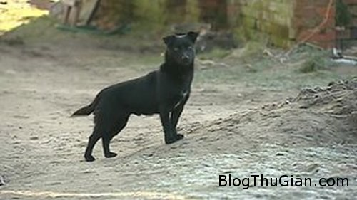 dog 243139 1368323388 600x0 Bé 3 tuổi sống sót nhờ được chó sưởi ấm suốt đêm