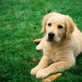 dog-jpeg-1375257890_600x0